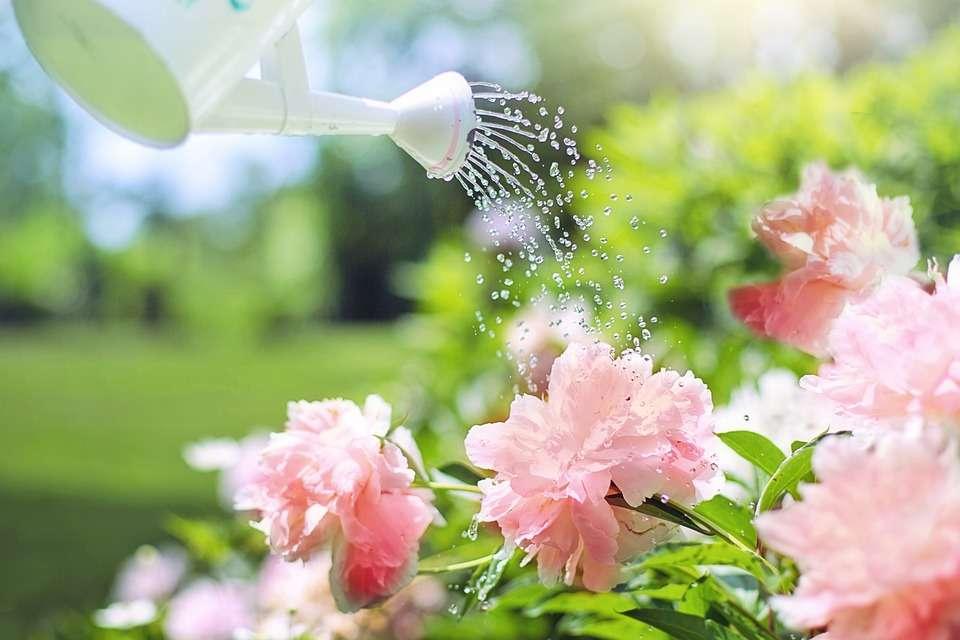 Gardening Tips - Watering