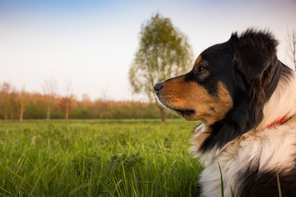 Tips to Get Your Dog Excited About Dog Training
