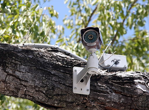Buying a New Home Consider These Insider Tips on Residential Security - CCTV in Tree