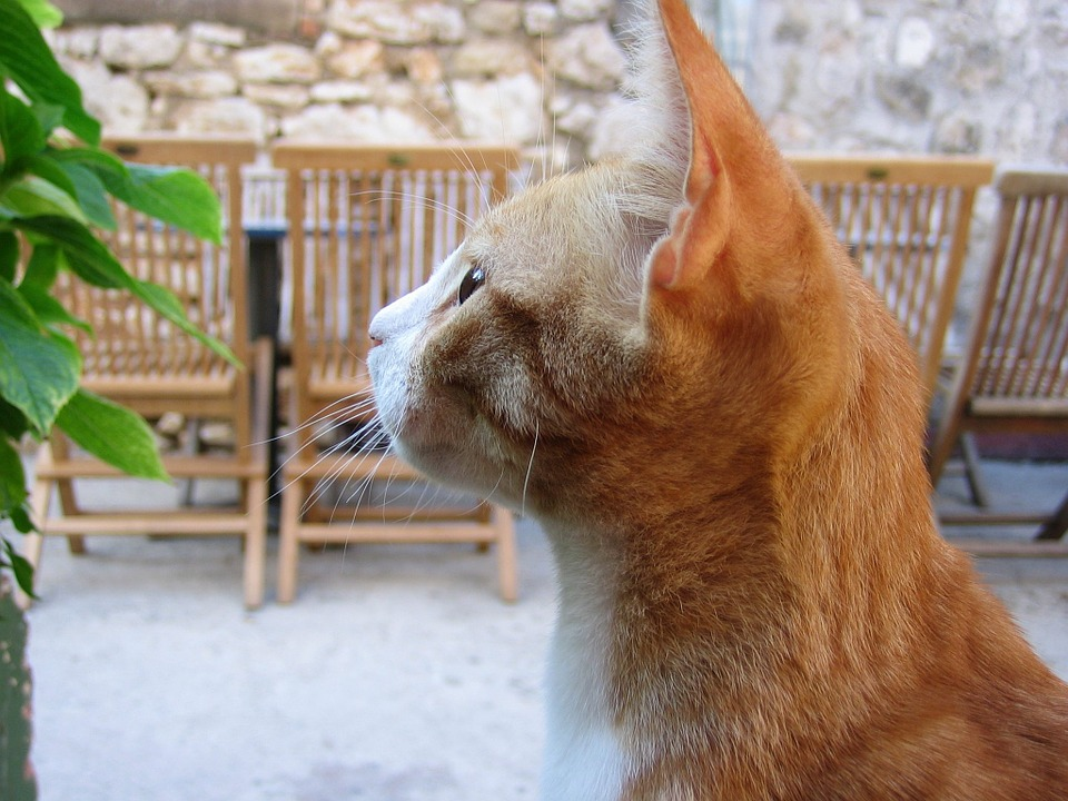 Helping Your Cat Maintain a Strong Immunity - 4