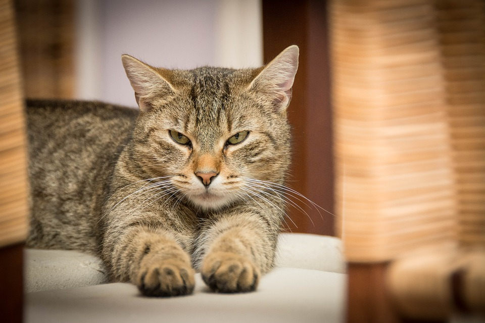 Helping Your Cat Maintain a Strong Immunity