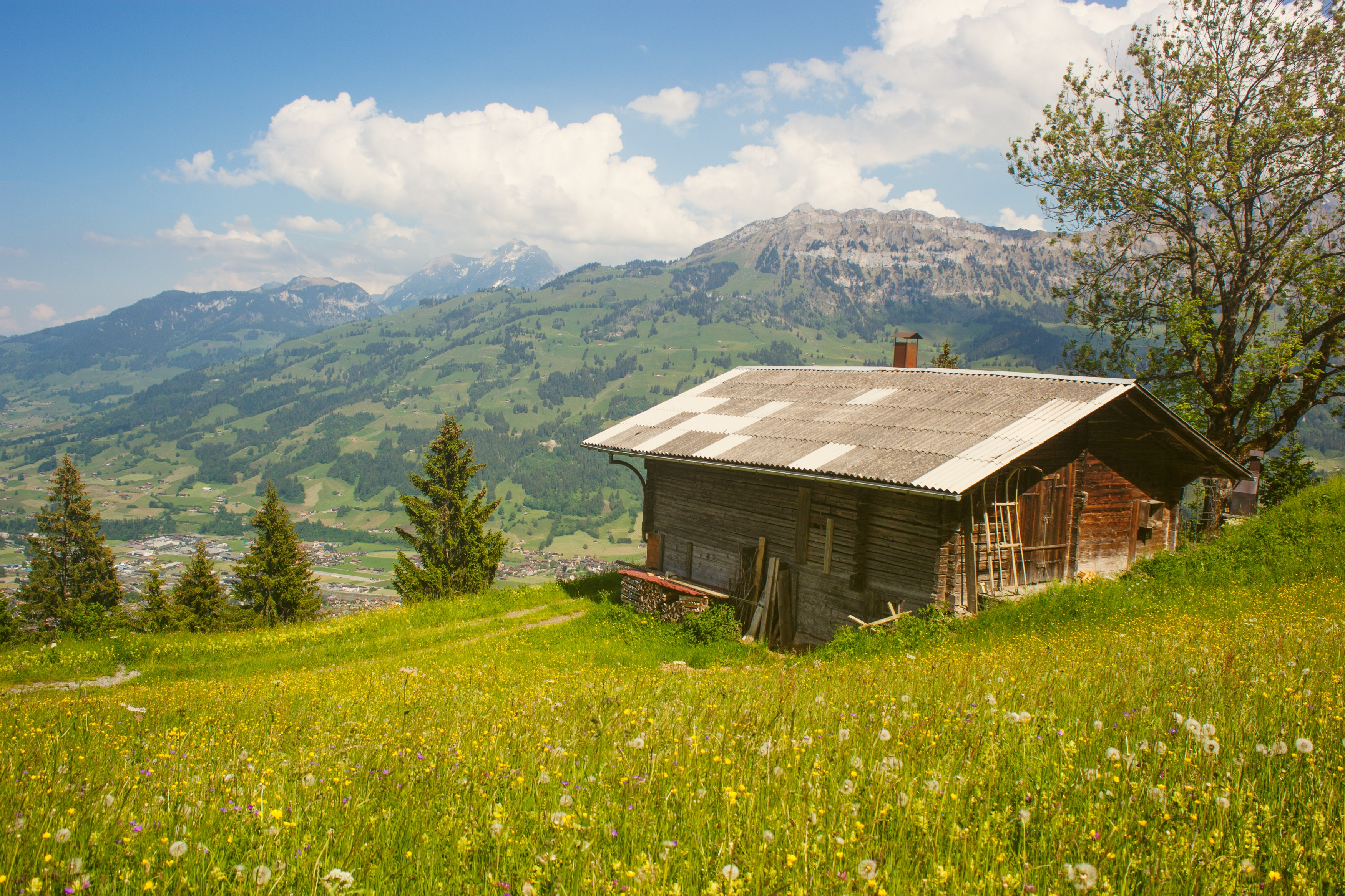 How to Find the Best Location for your Garden Shed
