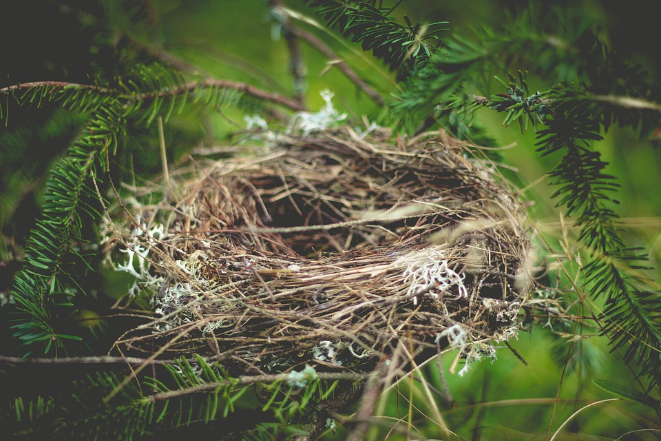 Guest Post - Empty Nest Syndrome