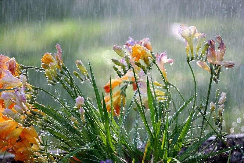 Protecting Your Garden Against Heavy Rain